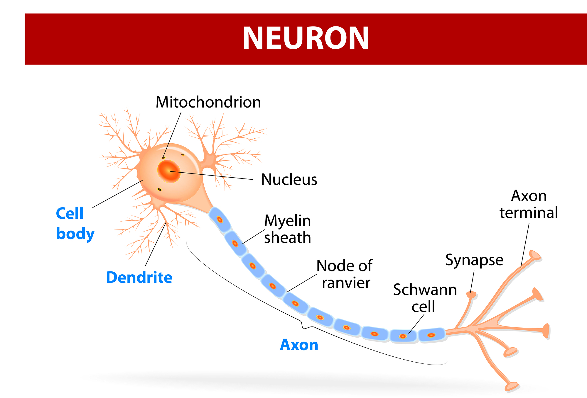 neuron and benefit You are leaving aarporg and going to the website of our trusted provider the provider's terms, conditions and policies apply please return to aarporg to learn more about other benefits.