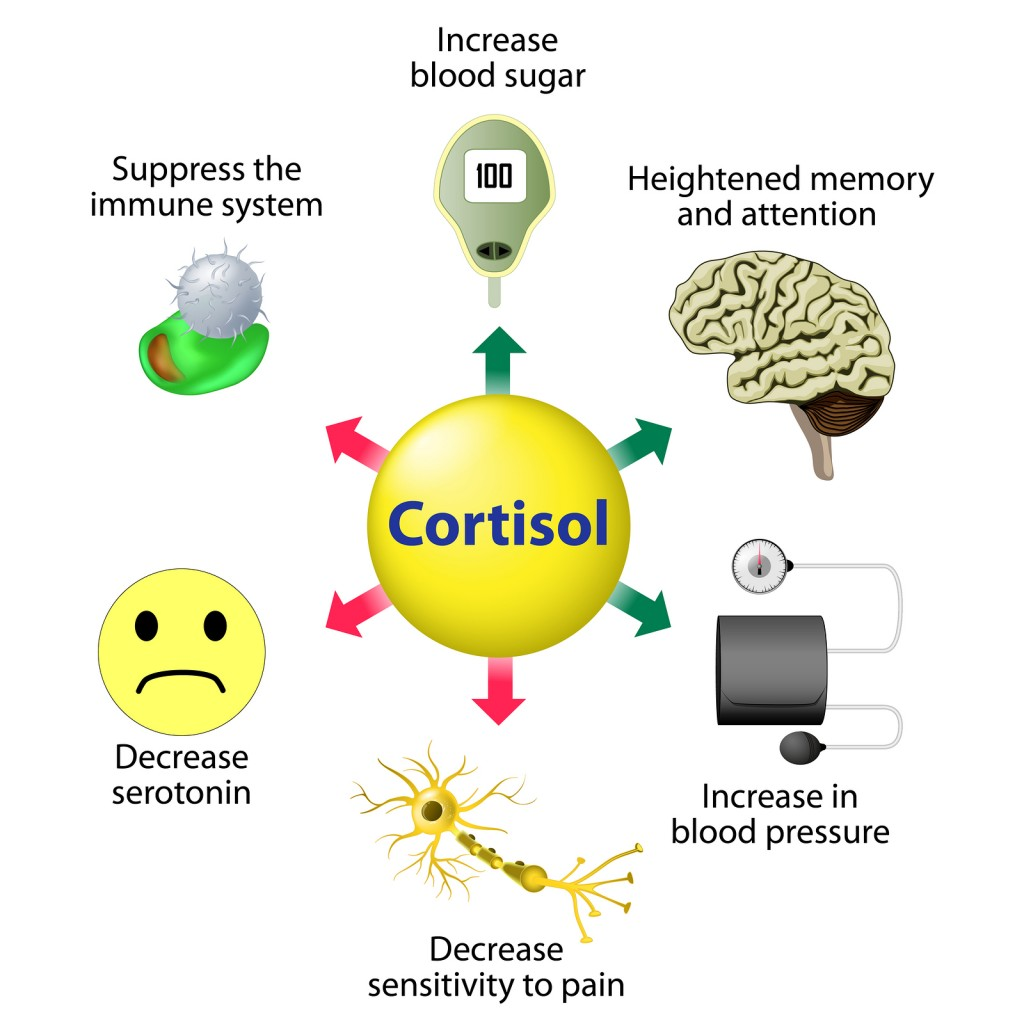 Stress Management - Cortisol