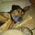Sleeping with his bone