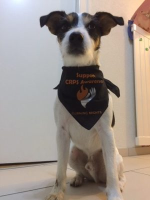 Billy from Switzerland is supporting CRPS awareness with his new small size Burning Nights CRPS Awareness Pet Bandana