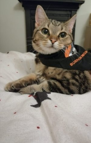 Support Burning Nights CRPS Support by purchasing our pet bandana like Aldous the cat