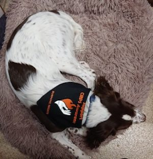 Check out Floki wearing the Burning Nights CRPS Support CRPS awareness pet bandana! Thanks Floki for being a Suppawter!